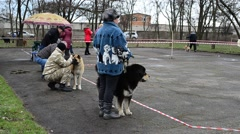 Breeding exhibition of dogs. Ukraine, Berdyansk. Stock Footage