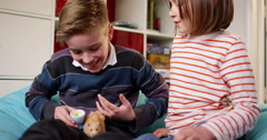 Littel girl and her elder brother play with their pet guinea pig. - stock footage