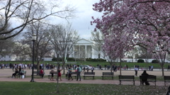 White House, magnolias, tourists, scenic; push in Stock Footage