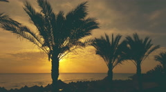 Palm trees silhouettes at sunset on a tropical island beach with parasols Stock Footage