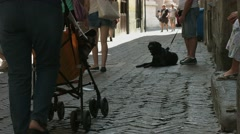 People and animals on the streets of the old town - stock footage
