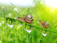 Snails on dewy grass - stock photo