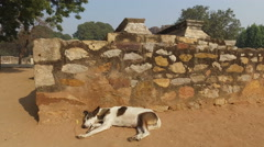 Stray dog in the Qutb Minar complex - India Stock Footage