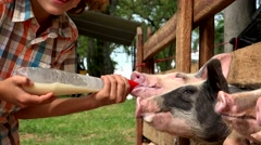 Boy Feeding Milk To Pigs Stock Footage