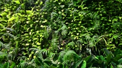 Wall of tropical plants. Stock Footage