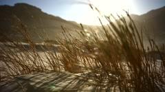 Tracking shot of backlit golden coastal grass on dunes Stock Footage