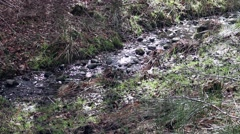 A babbling brook n the forest Stock Footage