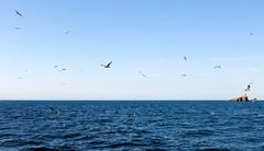 Birds near Isla Grosa - Spanish island by La Manga - stock photo
