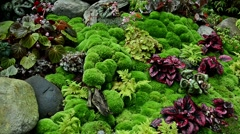 Zoom in ground full of begonias and moss Stock Footage