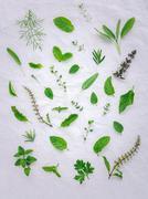 Various fresh herbs from the garden holy basil flower, basil flower,rosemary, Stock Photos