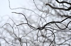 Leafless tree branches perspective. Top of trees against sky - stock photo