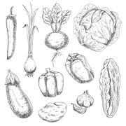 Farm vegetables sketches for recipe book - stock illustration