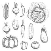 Retro sketches of garden vegetables - stock illustration