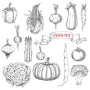 Stock Illustration of Farm vegetables sketches for food design
