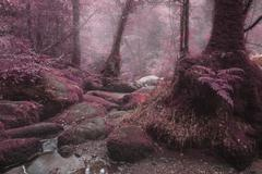 Unusual surreal alternate color forest landscape image Stock Photos