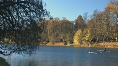 Turin in autumn along the Po river with rowers training Stock Footage