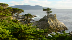 Pebble Beach California famous Lone Elm cypress tree and ocean on 17-mile drive Stock Footage
