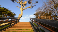Carmel California old tree and steps to beach abstract in exclusive city sunset Stock Footage