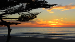 Carmel California cypress tree and waves at sunset on ocean at beach below city Stock Footage
