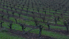 Sonoma Valley California grapes farming in fall wine winery vineyards Napa Stock Footage