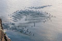 Flock of birds flying above water Kuvituskuvat