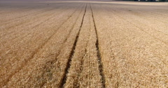 Flight Over a Wheat Field - stock footage