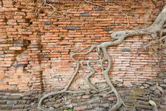 Wall with root cover - stock photo