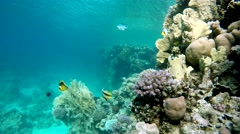 The corals and fish. Diving, Aqua Animal, Snorkeling, - stock footage