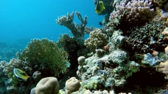 Life under the water. Diving on a tropical reef. Stock Footage
