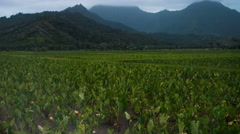 Pan time lapse of Hanalei, Kauai, Hawaii, Taro Plantation Arkistovideo