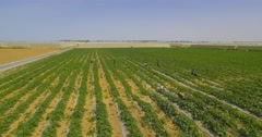 Farmers in a vegetables field. Stock Footage