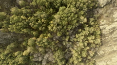 Mountain Forest. Shooting Fall From Height. Stock Footage