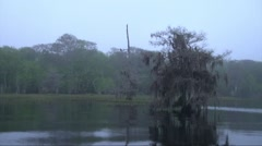 Slowly moving through Cypress trees, Florida - stock footage