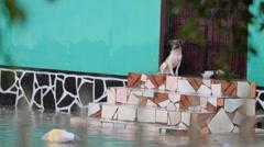 Dog abandoned in flooded neighborhood Stock Footage