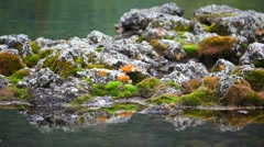 The stones in the water and moss Stock Footage
