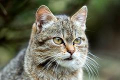 Close up cat portrait Stock Photos