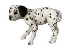 Dalmatian Puppy on White - stock illustration