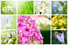 Spring natural collage - stock photo
