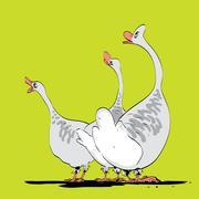 Farm bird wild or domestic goose - stock illustration
