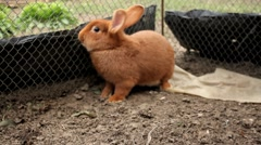 Stock Video Footage of Rabbit in a cage. Rabbit on household yard. Ecology.
