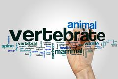 Vertebrate word cloud - stock photo