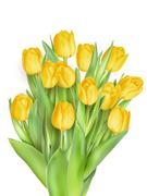 Bunch of tulips. EPS 10 - stock illustration