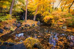 yellow maple leaves waterfall lake garden in autumn - stock photo
