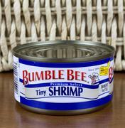 Bumble Bee shrimp - stock photo