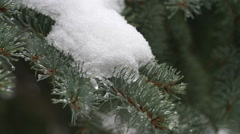 Snowcovered pine branch as snow continues to fall Arkistovideo