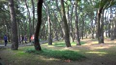 Tourists in the Gyeongju Tumuli Park. South Korea. Stock Footage