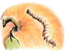 mealworm - stock illustration