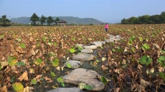 Tourist girl on the stone road at the path with withered lotuses Stock Footage