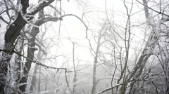Panning shot of snowy forest - stock footage
