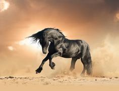 frisian stallion horse in the wild - stock photo